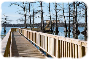 Grassy Island Boardwalk - Courtesy of Richie Brownlee